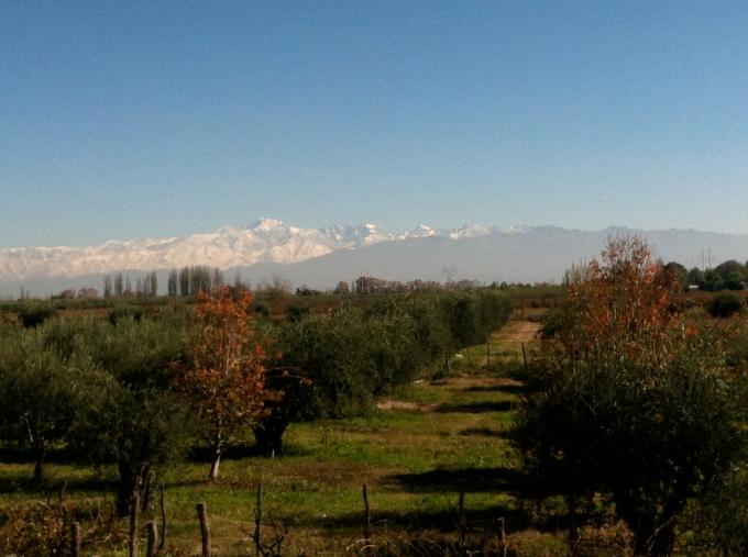 winevineyard, Argentina